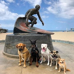 dogs by statue